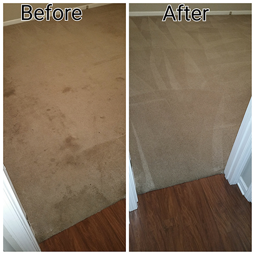 Carpet Cleaning Pet Stains Dog Urine