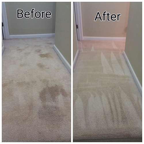 Dog Stain and Odor Removal