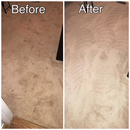 Animal Stain Removal